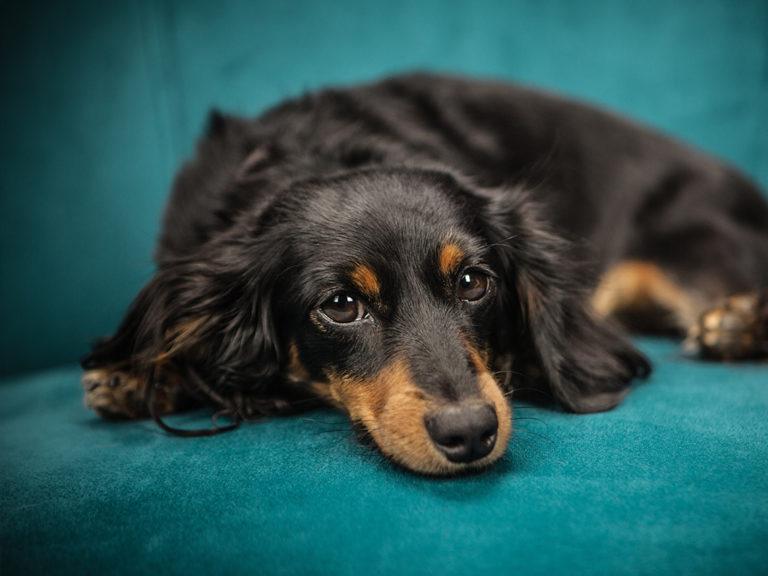 Tierhomoeopathischer-Notdienst-Hund1