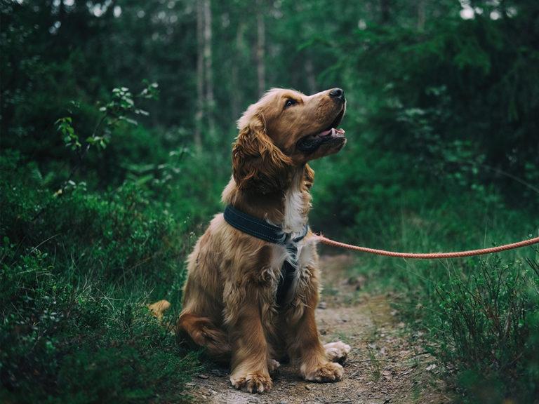 Tierhomoeopathischer-Notdienst-Hund3