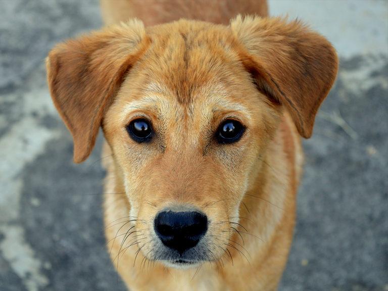 Tierhomoeopathischer-Notdienst-Hund4