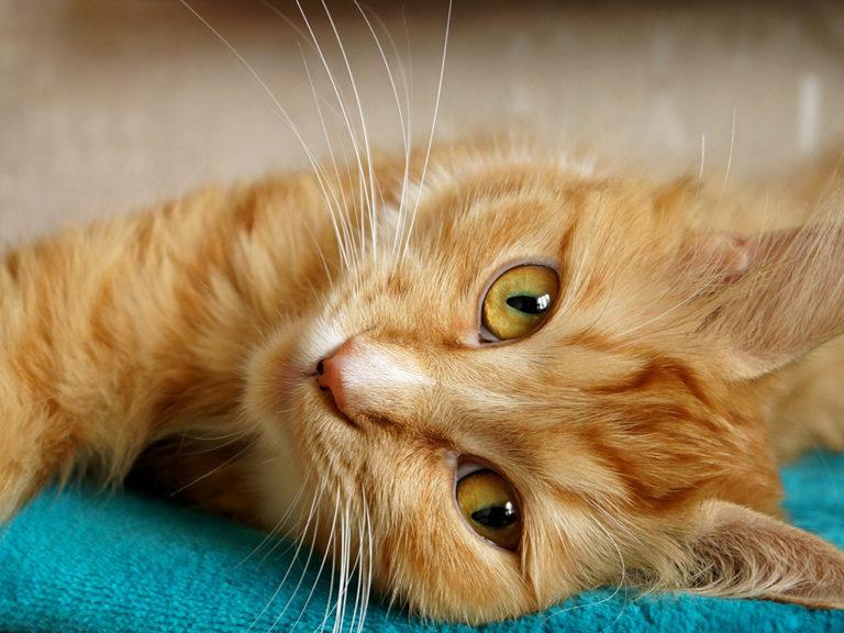 Tierhomoeopathischer-Notdienst-Katze1