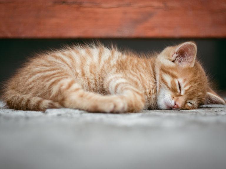 Tierhomoeopathischer-Notdienst-Katze3