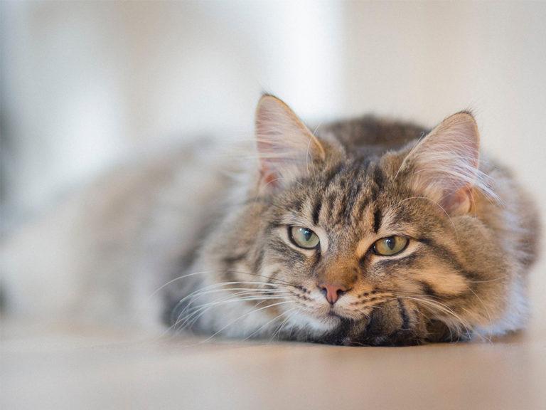 Tierhomoeopathischer-Notdienst-Katze4