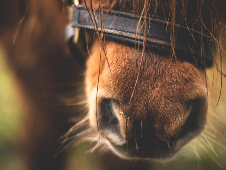 Tierhomoeopathischer-Notdienst-Pferd2