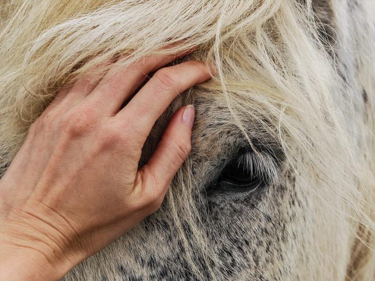 Tierhomoeopathischer-Notdienst-Pferd4