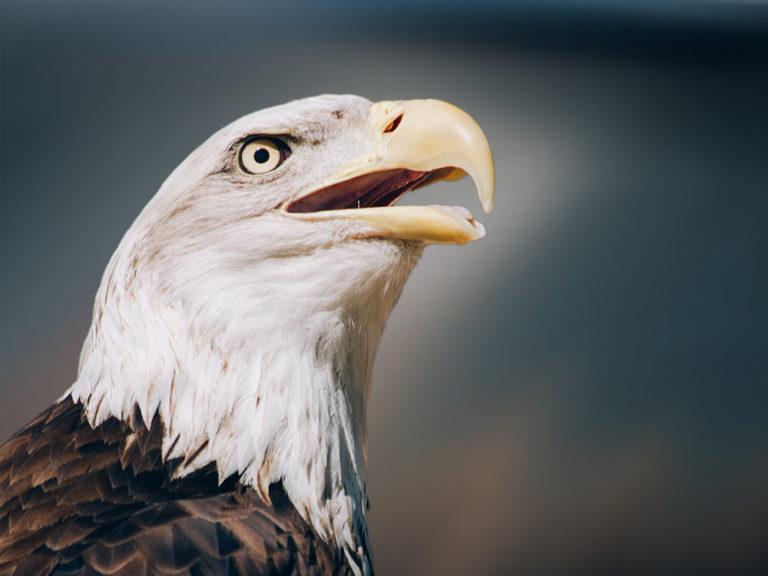 Tierhomoeopathischer-Notdienst-Vogel1
