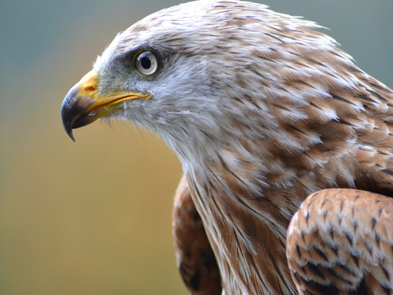Tierhomoeopathischer-Notdienst-Vogel3