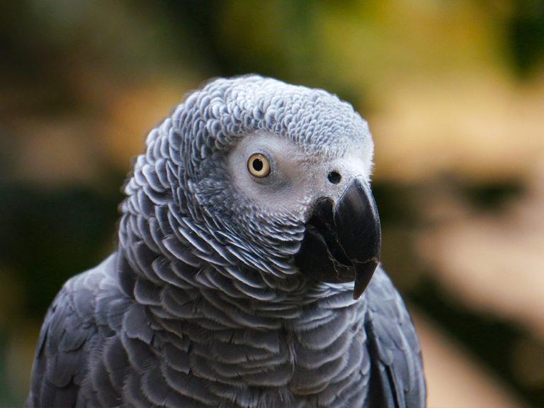 Tierhomoeopathischer-Notdienst-Vogel4