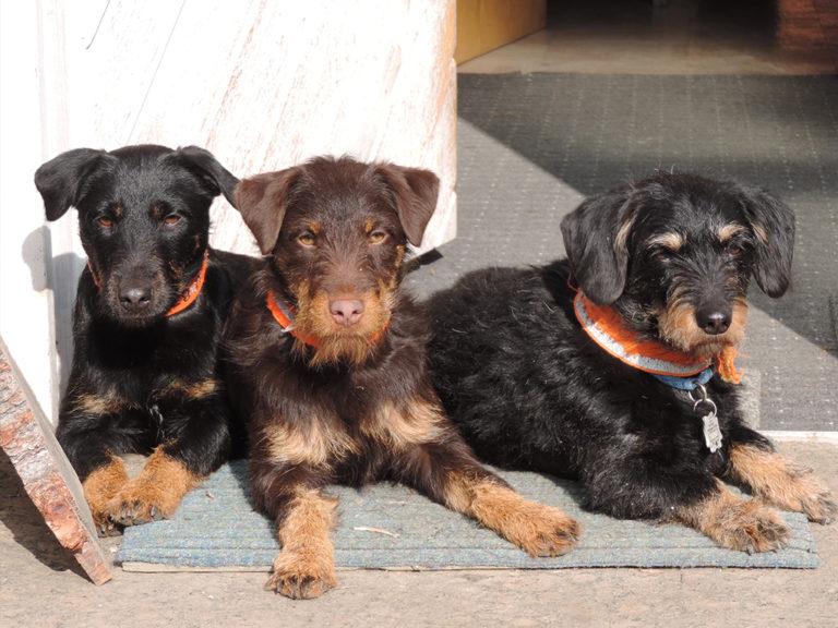 Tierhomoeopathischer-Notdienst-Hund5