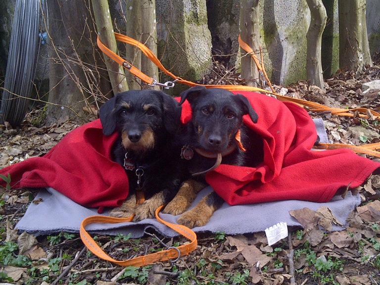 Tierhomoeopathischer-Notdienst-Hund6
