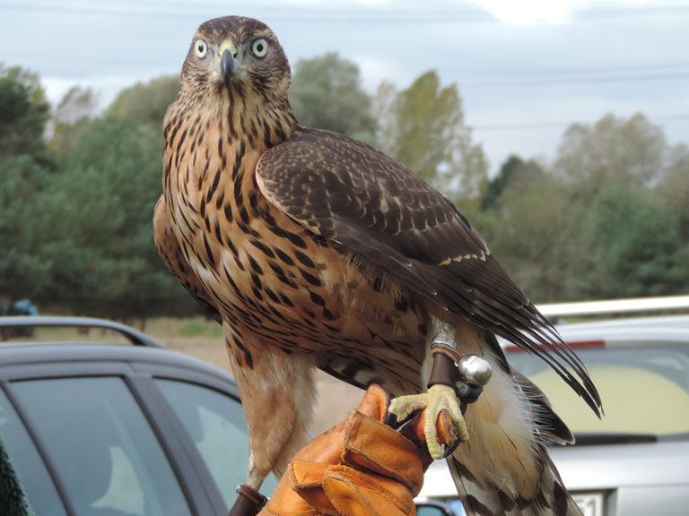 Tierhomoeopathischer-Notdienst-Vogel5