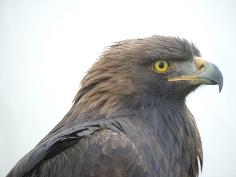 Tierhomoeopathischer-Notdienst-Vogel6