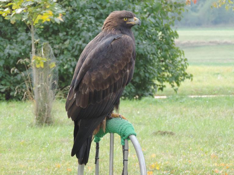 Tierhomoeopathischer-Notdienst-Vogel7