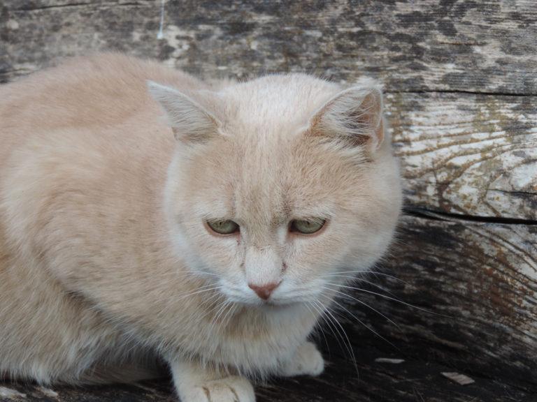 Tierhomoeopathischer-Notdienst-Katze5