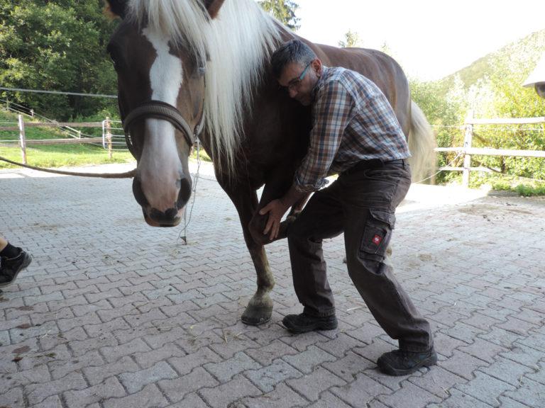 Tierhomoeopathischer-Notdienst-Tierphysiotherapie-Pferd2
