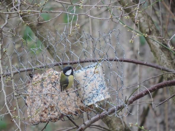 Zutaten für Vogelfutter